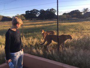 Cheetahs bij CCF