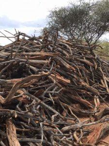 Sekelbos hout gedroogd en klaar voor verwerking